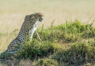 1 Day Ruma national park From Kisumu