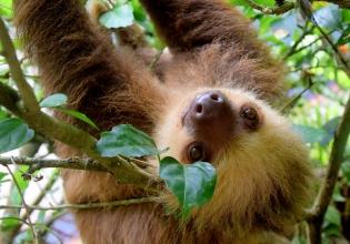 Rescue Center Costa Rica Volunteer Program