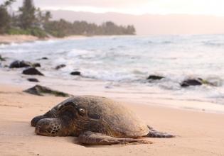 Sea Turtle Retreat for Girl Scouts