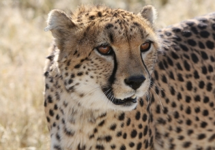 Volunteer With Endangered Species in Zululand