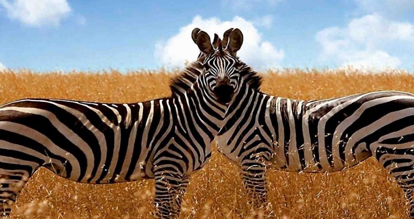 7 Day Tanzania Luxury Tour Safari