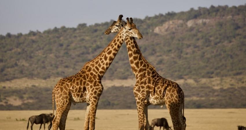 6 Days Tanzania Northern Circuit Safari
