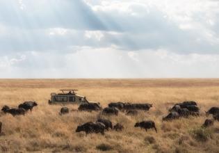 Let's Plan your 5 Days Tanzania Safaris Vacation