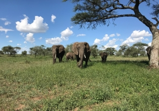 UGANDA BIG FIVE SAFARIS 5 DAYS