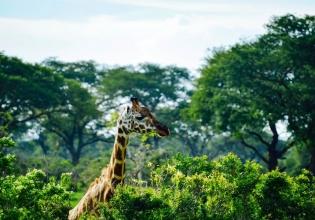 Most enjoyable Uganda safari 14 days