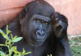 3 Days Chimpanzee Trekking in Kibale National Park Uganda