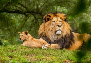 Uganda, Rwanda Gorilla and Wildlife Safari 12 Days