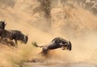 3 Days Masai Mara Lodge Safaris -Adventure At The Masai Mara National Reserve