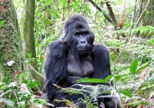 Uganda wild Safari 16 days